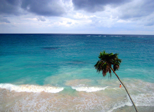 seascape of a tall palm tree on the beach leaning over into the blue             carribbean sea in Mexico
